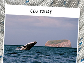 Click here to go to Eco-tours